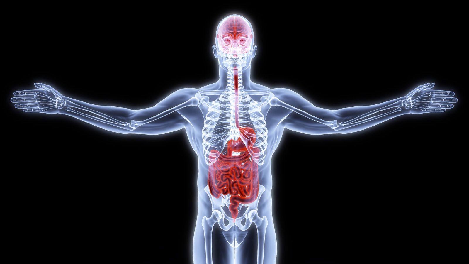 gut health image