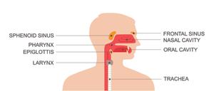 throat image