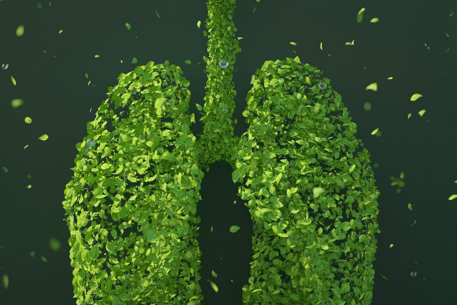 healthy lungs image