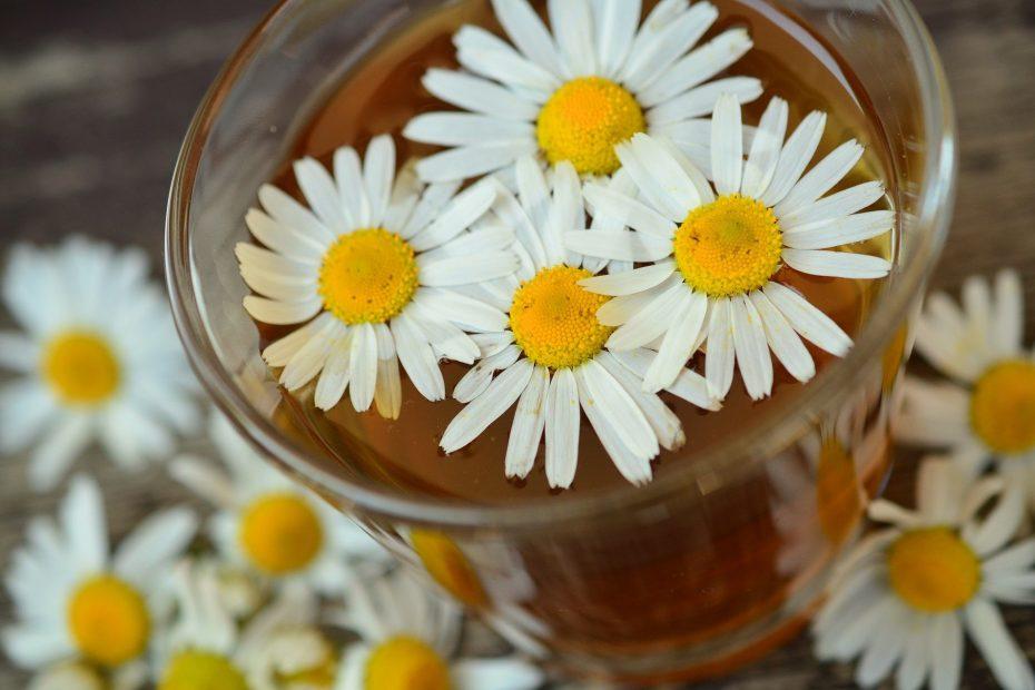 medicinal plants image