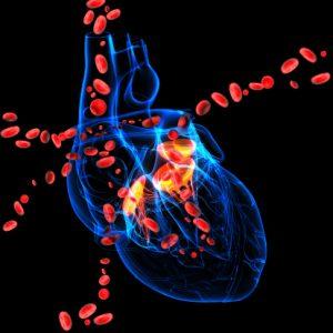 heart valve image