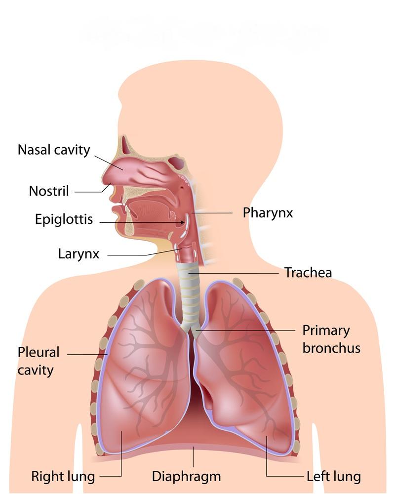 respiratory image