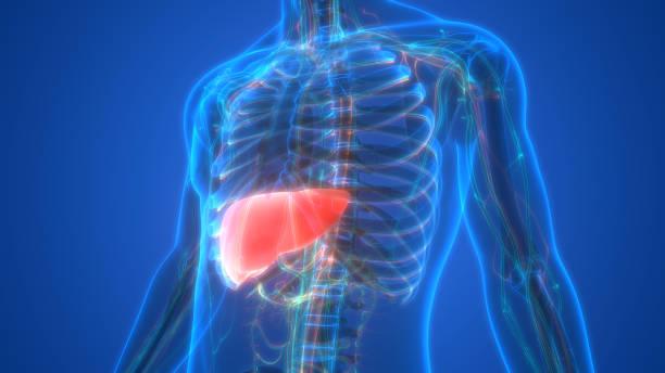 fatty liver image